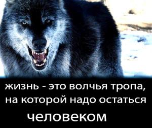 волк 3