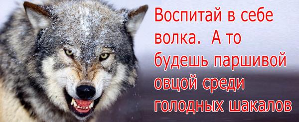 воспитай волка 1 копия