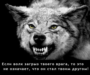 Волк-1